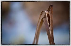 broken_reed