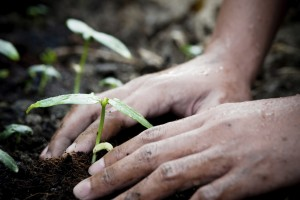 church-planting-growth and provision